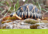 Meine Schildkröten (Wandkalender 2019 DIN A4 quer) - Produktdetailbild 9