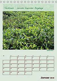 Meine Welt des Tees (Tischkalender 2019 DIN A5 hoch) - Produktdetailbild 1