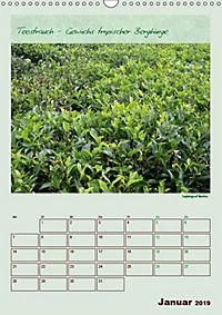 Meine Welt des Tees (Wandkalender 2019 DIN A3 hoch) - Produktdetailbild 1