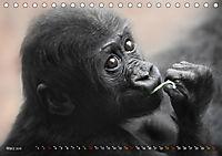 MENSCHENAFFENKINDER 2 (Tischkalender 2019 DIN A5 quer) - Produktdetailbild 3