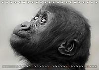 MENSCHENAFFENKINDER 2 (Tischkalender 2019 DIN A5 quer) - Produktdetailbild 7