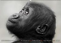 MENSCHENAFFENKINDER 2 (Wandkalender 2019 DIN A2 quer) - Produktdetailbild 7