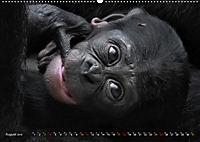 MENSCHENAFFENKINDER 2 (Wandkalender 2019 DIN A2 quer) - Produktdetailbild 8