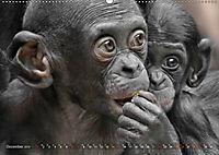 MENSCHENAFFENKINDER 2 (Wandkalender 2019 DIN A2 quer) - Produktdetailbild 12