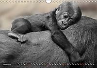 MENSCHENAFFENKINDER 2 (Wandkalender 2019 DIN A4 quer) - Produktdetailbild 1
