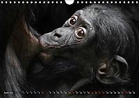 MENSCHENAFFENKINDER 2 (Wandkalender 2019 DIN A4 quer) - Produktdetailbild 4