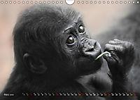 MENSCHENAFFENKINDER 2 (Wandkalender 2019 DIN A4 quer) - Produktdetailbild 3