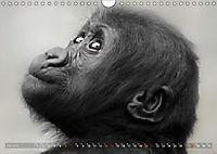 MENSCHENAFFENKINDER 2 (Wandkalender 2019 DIN A4 quer) - Produktdetailbild 7