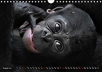 MENSCHENAFFENKINDER 2 (Wandkalender 2019 DIN A4 quer) - Produktdetailbild 8