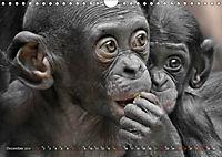 MENSCHENAFFENKINDER 2 (Wandkalender 2019 DIN A4 quer) - Produktdetailbild 12