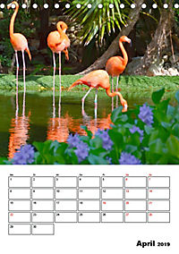 Mexiko - die Karibikküste (Tischkalender 2019 DIN A5 hoch) - Produktdetailbild 4