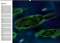Mikrobiologie. Mikroorganismen, Genetik und Zellen (Wandkalender 2019 DIN A2 quer) - Produktdetailbild 6