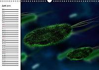 Mikrobiologie. Mikroorganismen, Genetik und Zellen (Wandkalender 2019 DIN A3 quer) - Produktdetailbild 6