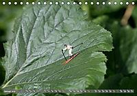 Miniaturfiguren in der Makrowelt ...ganz gross im Garten (Tischkalender 2019 DIN A5 quer) - Produktdetailbild 1