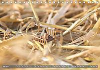Miniaturfiguren in der Makrowelt ...ganz gross im Garten (Tischkalender 2019 DIN A5 quer) - Produktdetailbild 7