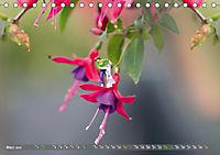 Miniaturfiguren in der Makrowelt ...ganz gross im Garten (Tischkalender 2019 DIN A5 quer) - Produktdetailbild 3