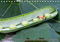 Miniaturfiguren in der Makrowelt ...ganz gross im Garten (Tischkalender 2019 DIN A5 quer) - Produktdetailbild 11