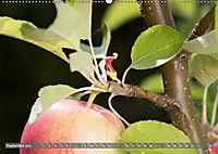 Miniaturfiguren in der Makrowelt ...ganz gross im Garten (Wandkalender 2019 DIN A2 quer) - Produktdetailbild 9