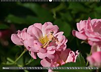 Miniaturfiguren in der Makrowelt ...ganz gross im Garten (Wandkalender 2019 DIN A2 quer) - Produktdetailbild 5