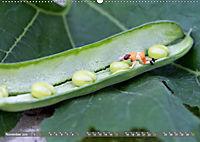 Miniaturfiguren in der Makrowelt ...ganz gross im Garten (Wandkalender 2019 DIN A2 quer) - Produktdetailbild 11