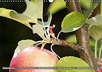 Miniaturfiguren in der Makrowelt ...ganz gross im Garten (Wandkalender 2019 DIN A3 quer) - Produktdetailbild 9