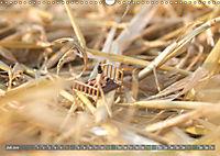 Miniaturfiguren in der Makrowelt ...ganz gross im Garten (Wandkalender 2019 DIN A3 quer) - Produktdetailbild 7
