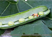Miniaturfiguren in der Makrowelt ...ganz gross im Garten (Wandkalender 2019 DIN A3 quer) - Produktdetailbild 11