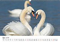 Mit dem Schwan durchs JahrAT-Version (Wandkalender 2019 DIN A3 quer) - Produktdetailbild 4