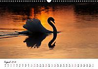 Mit dem Schwan durchs JahrAT-Version (Wandkalender 2019 DIN A3 quer) - Produktdetailbild 8