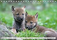 Mit dem Wolf durch's Jahr (Tischkalender 2019 DIN A5 quer) - Produktdetailbild 7
