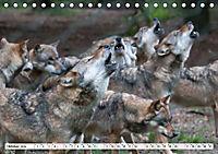 Mit dem Wolf durch's Jahr (Tischkalender 2019 DIN A5 quer) - Produktdetailbild 13