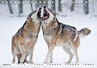 Mit dem Wolf durch's Jahr (Tischkalender 2019 DIN A5 quer) - Produktdetailbild 1