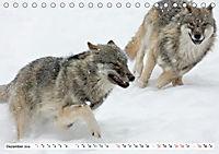 Mit dem Wolf durch's Jahr (Tischkalender 2019 DIN A5 quer) - Produktdetailbild 12