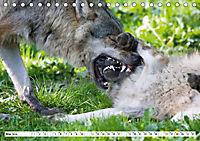 Mit dem Wolf durch's Jahr (Tischkalender 2019 DIN A5 quer) - Produktdetailbild 5