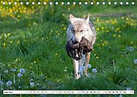 Mit dem Wolf durch's Jahr (Tischkalender 2019 DIN A5 quer) - Produktdetailbild 6