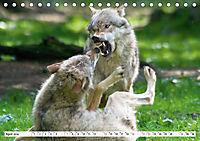 Mit dem Wolf durch's Jahr (Tischkalender 2019 DIN A5 quer) - Produktdetailbild 4