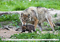 Mit dem Wolf durch's Jahr (Wandkalender 2019 DIN A3 quer) - Produktdetailbild 5
