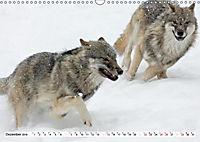 Mit dem Wolf durch's Jahr (Wandkalender 2019 DIN A3 quer) - Produktdetailbild 9
