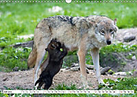 Mit dem Wolf durch's Jahr (Wandkalender 2019 DIN A3 quer) - Produktdetailbild 13