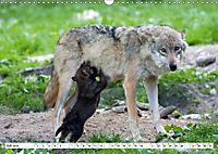 Mit dem Wolf durch's Jahr (Wandkalender 2019 DIN A3 quer) - Produktdetailbild 7