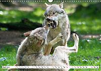 Mit dem Wolf durch's Jahr (Wandkalender 2019 DIN A3 quer) - Produktdetailbild 4