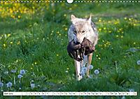 Mit dem Wolf durch's Jahr (Wandkalender 2019 DIN A3 quer) - Produktdetailbild 6