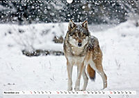 Mit dem Wolf durch's Jahr (Wandkalender 2019 DIN A3 quer) - Produktdetailbild 11