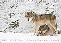 Mit dem Wolf durch's Jahr (Wandkalender 2019 DIN A4 quer) - Produktdetailbild 2