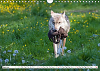 Mit dem Wolf durch's Jahr (Wandkalender 2019 DIN A4 quer) - Produktdetailbild 6