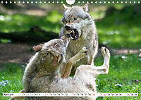 Mit dem Wolf durch's Jahr (Wandkalender 2019 DIN A4 quer) - Produktdetailbild 4