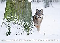 Mit dem Wolf durch's Jahr (Wandkalender 2019 DIN A4 quer) - Produktdetailbild 3