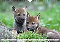Mit dem Wolf durch's Jahr (Wandkalender 2019 DIN A4 quer) - Produktdetailbild 8