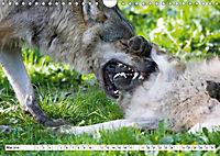 Mit dem Wolf durch's Jahr (Wandkalender 2019 DIN A4 quer) - Produktdetailbild 5