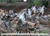 Mit dem Wolf durch's Jahr (Wandkalender 2019 DIN A4 quer) - Produktdetailbild 10